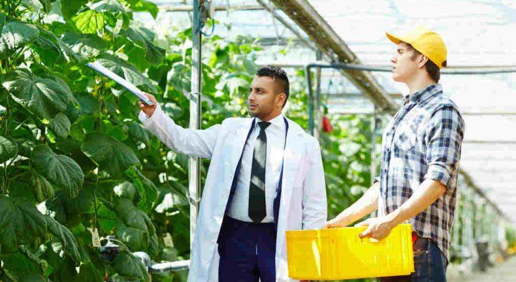 Qual a importância da gestão do Agronegócio?